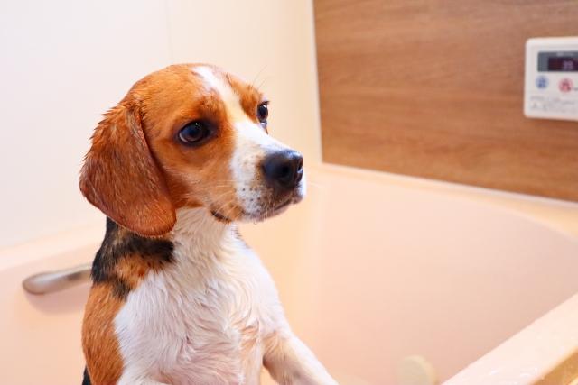 【2021年】おすすめの犬用・保湿シャンプー6選!動物看護師が厳選してみました