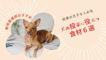 食べ物を使えば犬に薬を飲ませるのは簡単!投薬時に使いやすい食べ物と飲ませ方、警戒されない方法を一挙紹介
