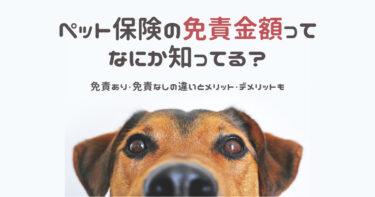 ペット保険の免責金額ってなに?免責なしのペット保険・メリットデメリットをまとめてみました